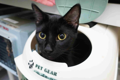 A black cat pops its head out of its carrier