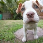 Mandatory spay neuter laws actually increase the number of animal deaths in a community because of increased impounds and reliinguishments.