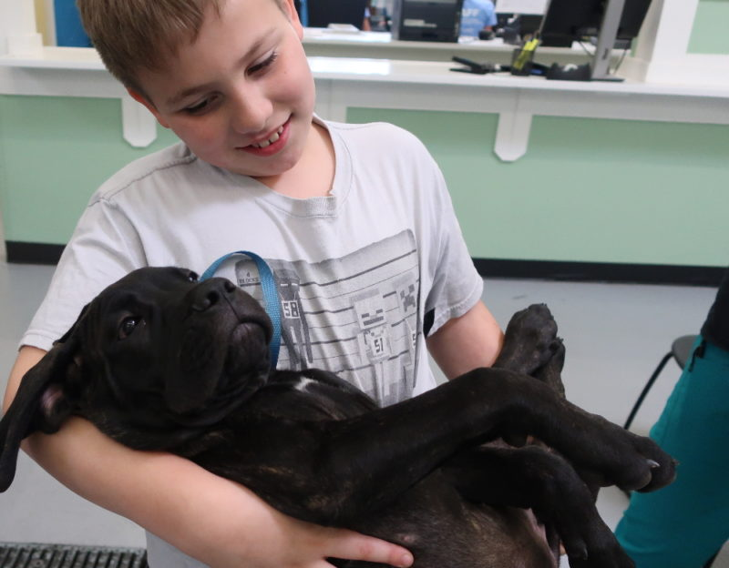 Want to see the human animal bond, look no further than a boy and his dog.