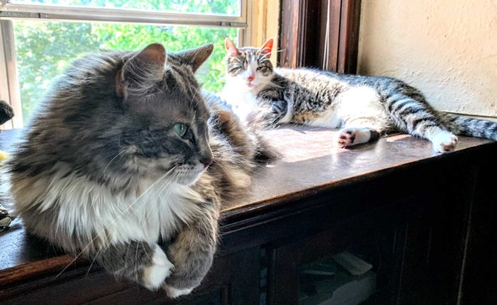 Two cats sit by an open window.