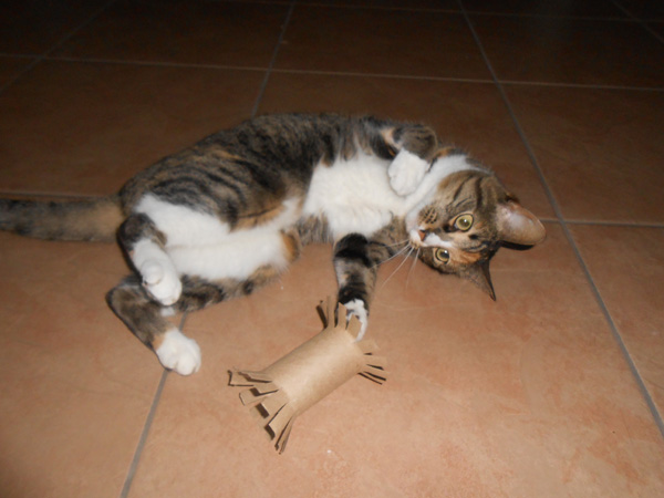 a cat plays with a toy made from a toilet paper roll