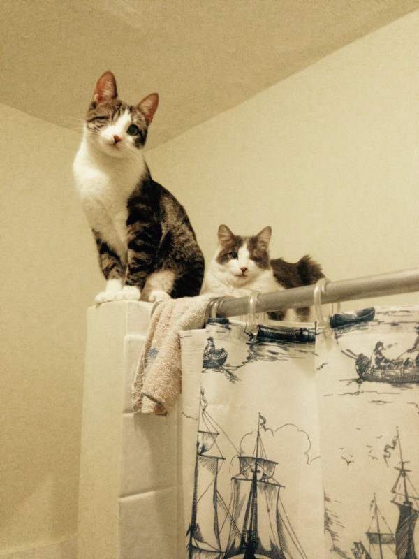 Cats in bathroom