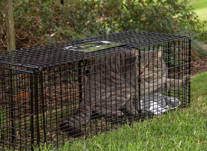 Cat traps like this one are used a lot in TNR (trap, neuter, return). But they come in handy for domesticated cats too.