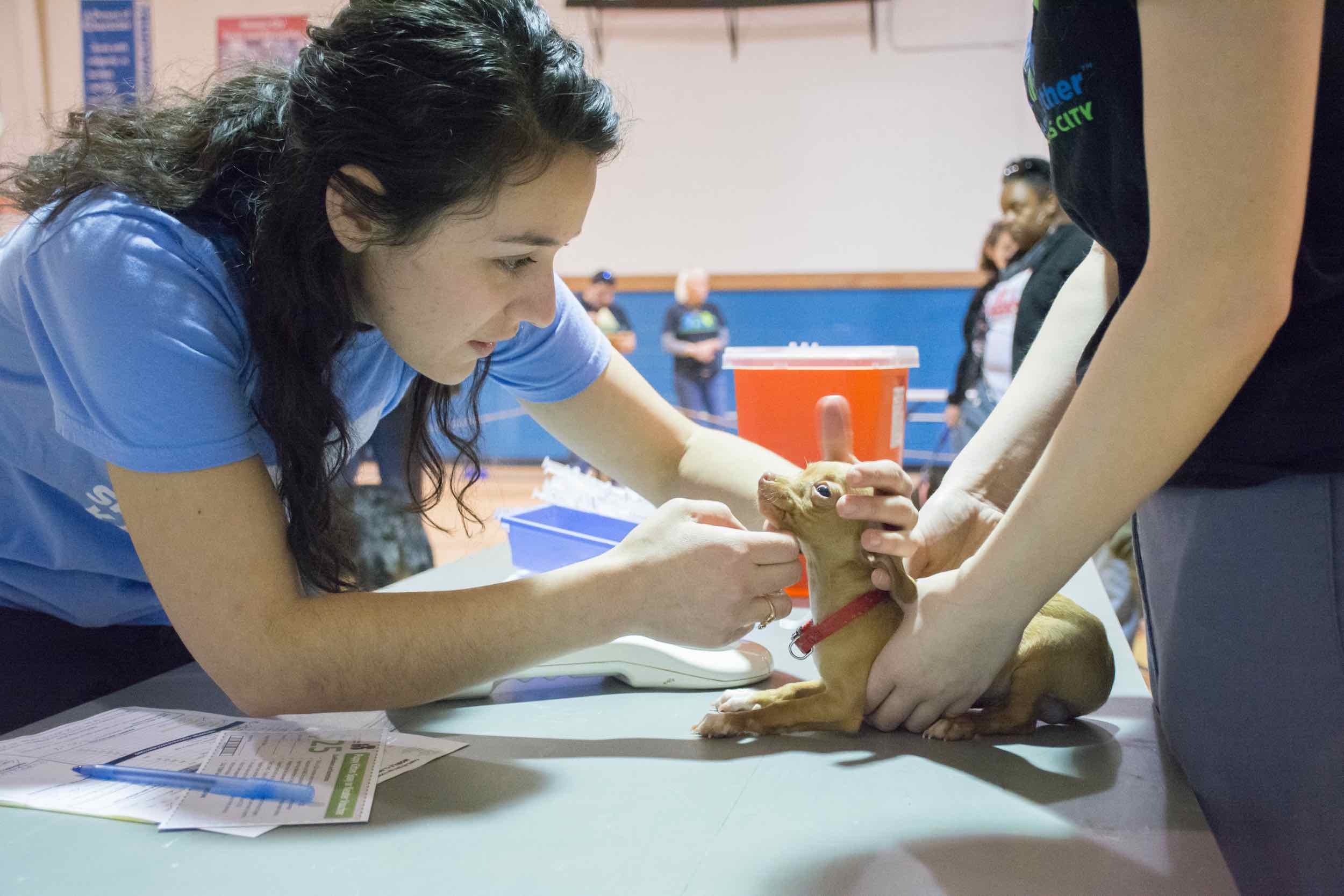 a woman looks at a young puppy as the vet tech holds the puppy still for examination.