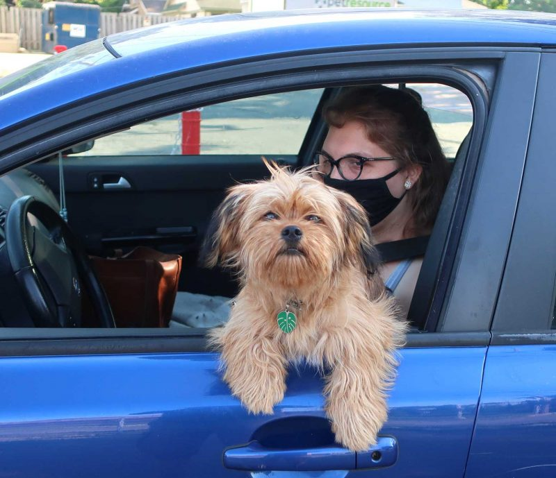 A dog hangs out the car window