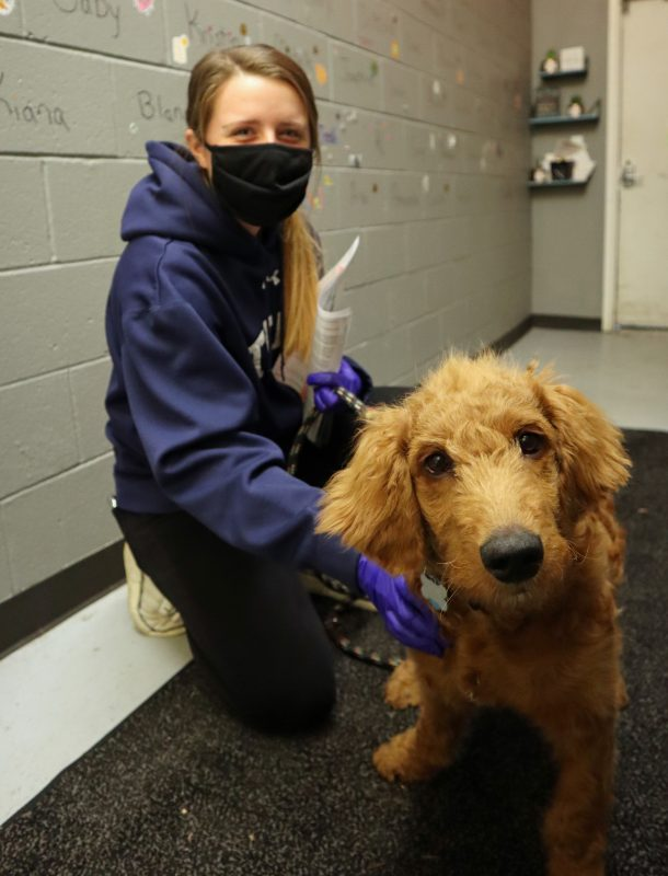 high school intern with goldendoodle puppy